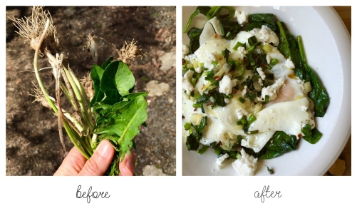 foraging before and after